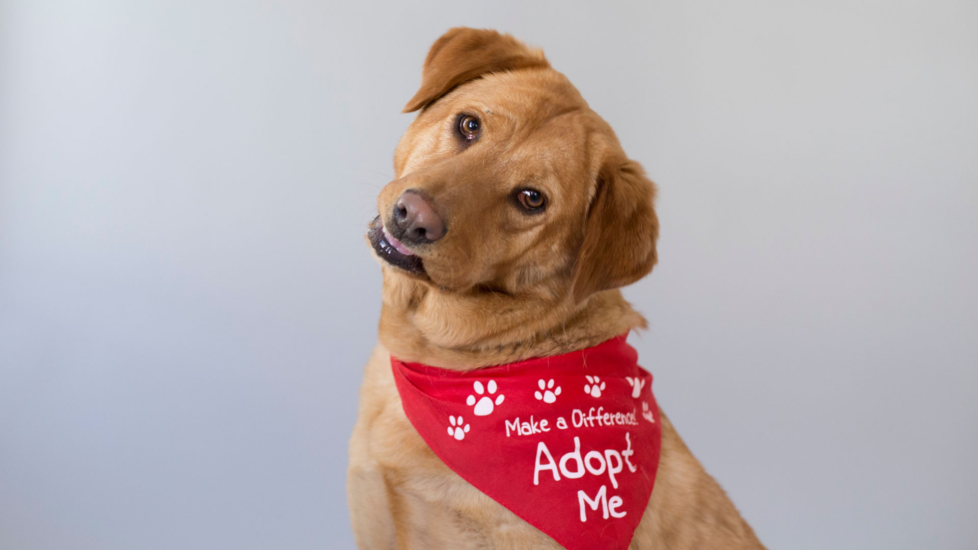 Mocha/golden w red adopt me bandana 4