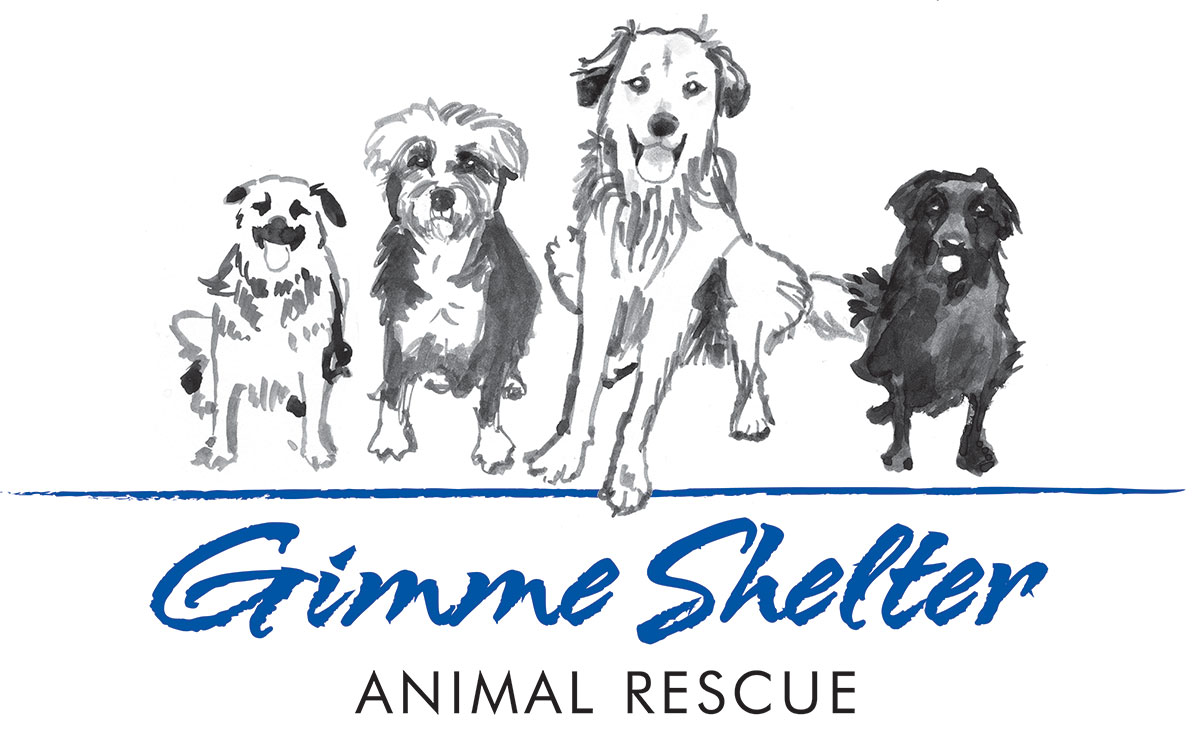 West Haven Animal Shelter Dogs Adoption