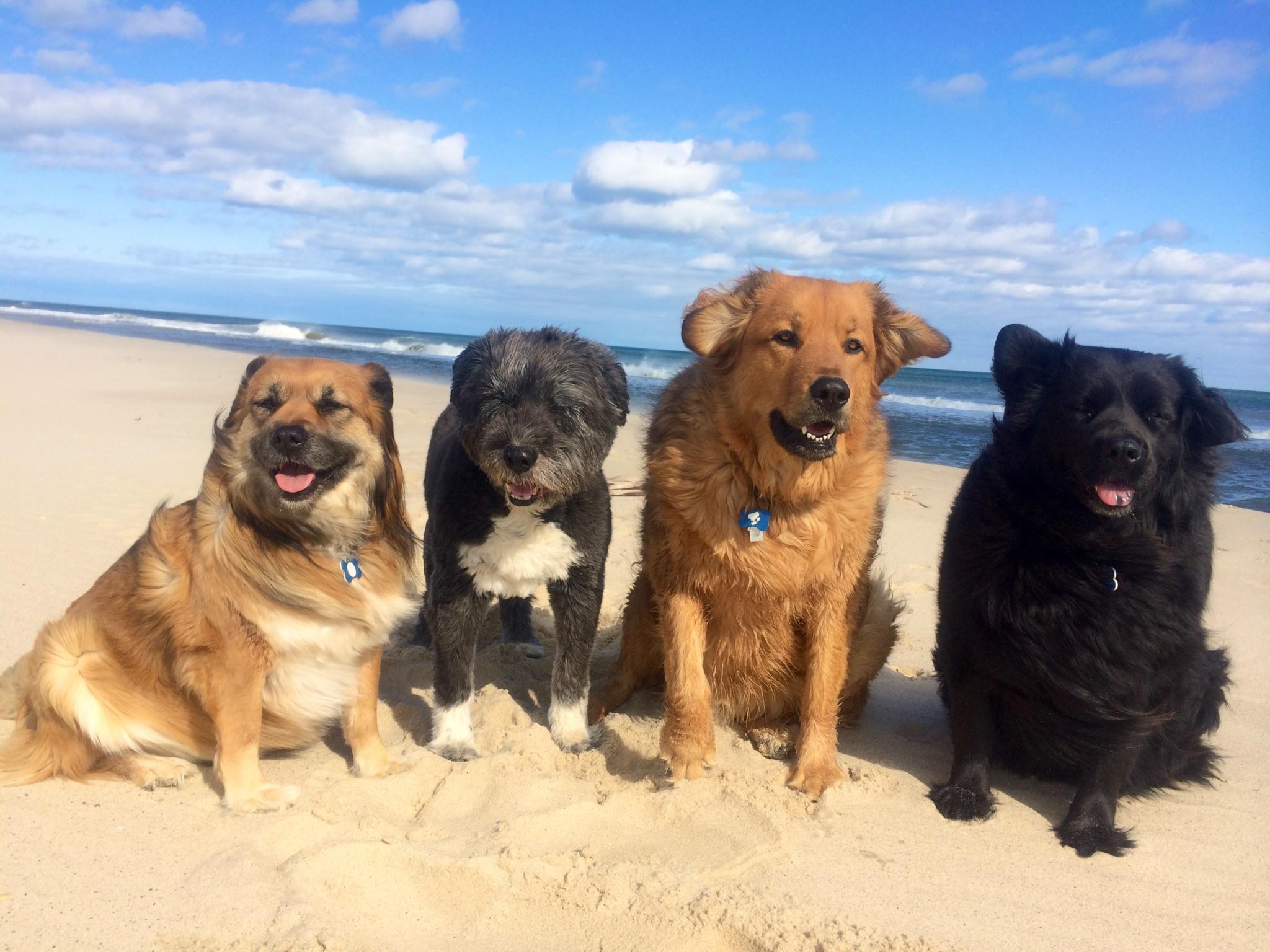 Me + 4 dogs on beach 8